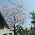 穏やかな春の日差しに誘われて、恒例のみなみワイズメンズクラブの花見が開催されました。 今年は氷点下が続く寒い寒い冬を乗り切った、桜の木が暖かい日差しに誘われて3月25日という例年よりも1週間も早く満開となったために、花見 […]